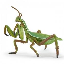 Praying mantis NEW 2019