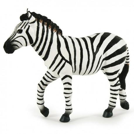Male zebra