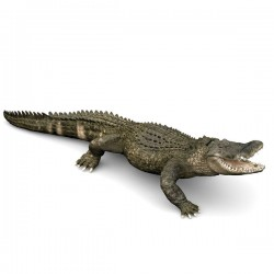 Alligator NEW 2019