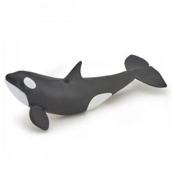 Killer whale calf NEW 2019