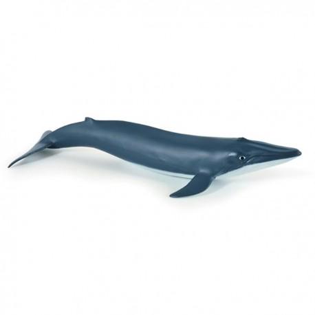 Bébé baleine bleue