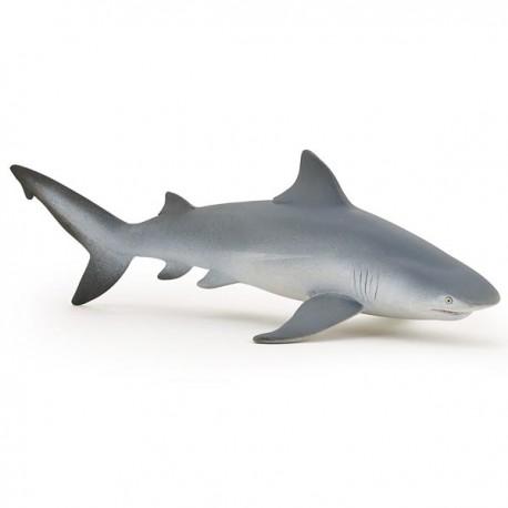 Requin bouledogue