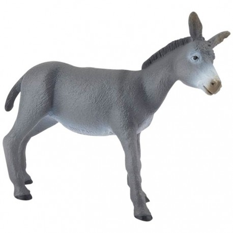 YOUNG GREY DONKEY