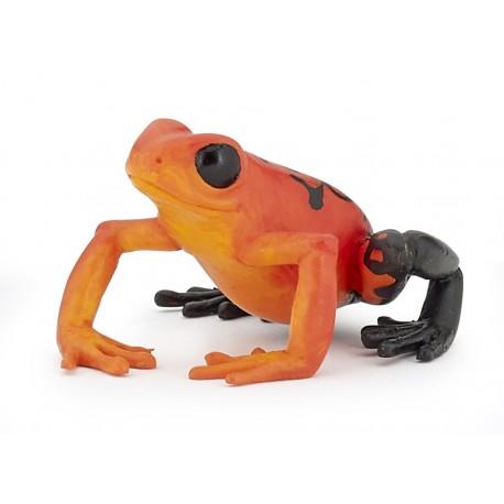 Equatorial Red frog