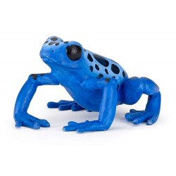 Grenouille équatoriale bleue