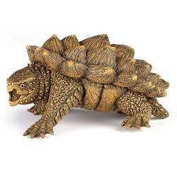 Tortue alligator***