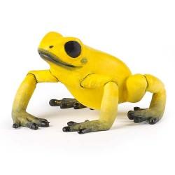 Grenouille équatoriale jaune