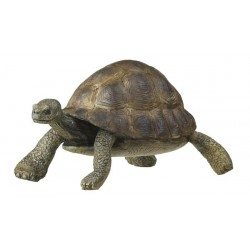 Tortoise***