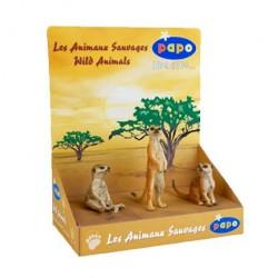 Boîte présentoir 3 suricates  retraité