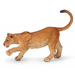 Young lioness***