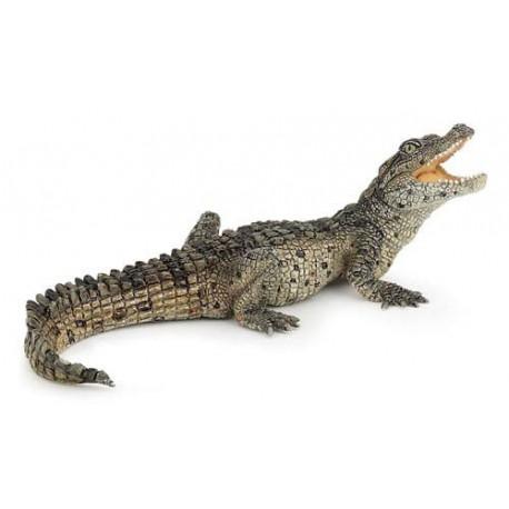 Bébé crocodile