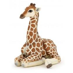 Bébé girafe couché