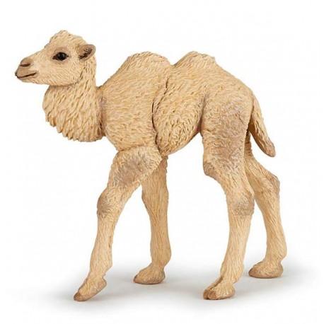 Bébé chameau