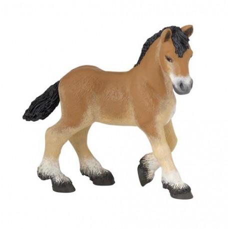 Ardennais Draft foal***