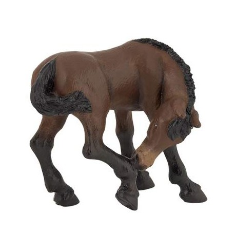 Lusitanian foal