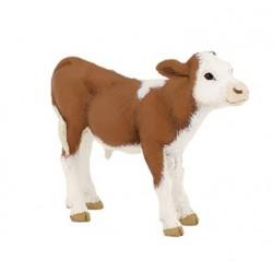 Simmental Calf