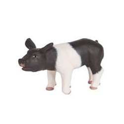 Black and White Piglet