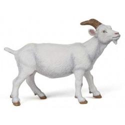 White nanny goat
