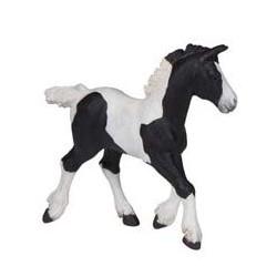 Black piebald cob foal
