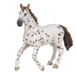Brown appaloosa mare