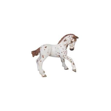 Brown appaloosa foal