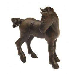 Percheron foal