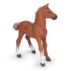Alezan english thouroughbred foal