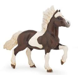 Alezan piebald islandic horse