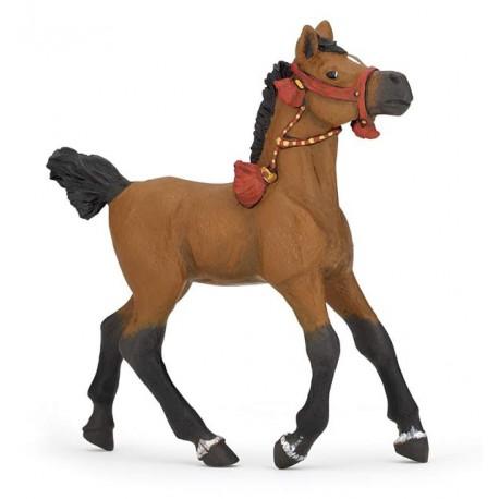 foal in parade dress