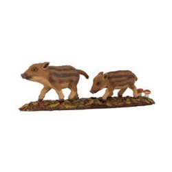 of wild boar piglets***