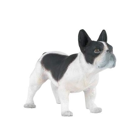 French black & white  bulldog