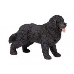 Newfoundland Terrier