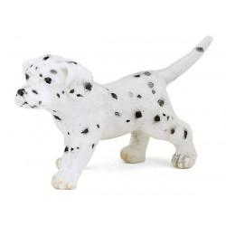 Bébé dalmatien