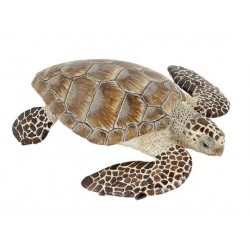 Turtle cacouanne
