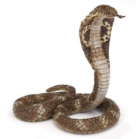 Cobra royal