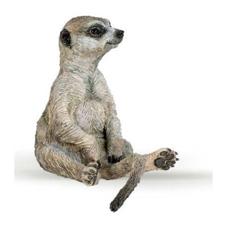 Sitting meerkat