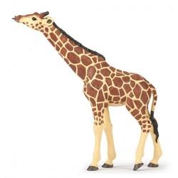 Girafe tête levée Nouveau 2018