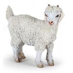 Young angora goat