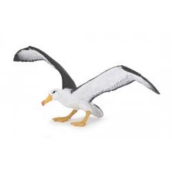Albatros Nouveau 2018