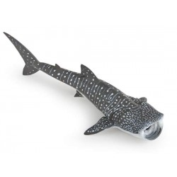 Requin baleine Nouveau 2018